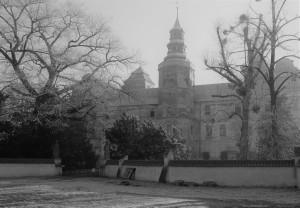 ogród Zamkowy_cisy
